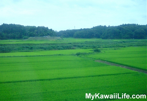 Rural Japan From The Narita Express